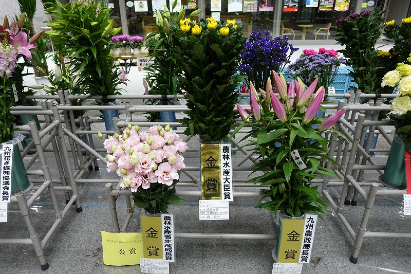 http://www.k-engei.net/kakikyokai/contents/news/DSC00655.jpg
